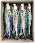 Fish Market Box - Cornish Mackerel by Diana Tonnison