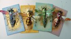 Colourful collection of insect brooches. Recycled plastics & mixed media by Hannah Coates