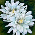 Cereus Cactus - silk painting by Leonard Thompson