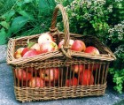 Apple Basket by Ted Bruce