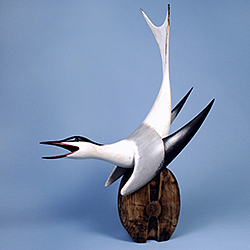 'Common Tern' by Chris Hindley, Decoy Art